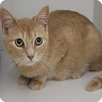 Adopt A Pet :: Tamsen - Mississauga, Ontario, ON