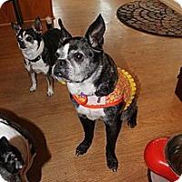 Adopt A Pet :: Koko - Temecula, CA