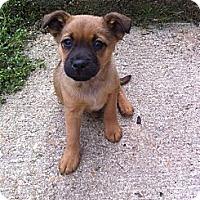 Adopt A Pet :: LITTLE BEE - Glastonbury, CT