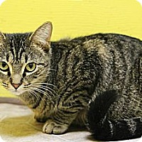 Adopt A Pet :: Lulu - Mobile, AL