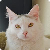 Adopt A Pet :: Allison - Palmdale, CA