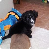 Adopt A Pet :: Watson - Denver, IN