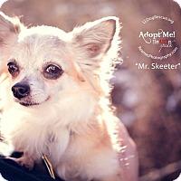 Adopt A Pet :: Mr. Skeeter - Shawnee Mission, KS
