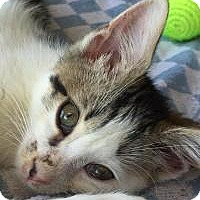 Adopt A Pet :: Sherry - East Hanover, NJ