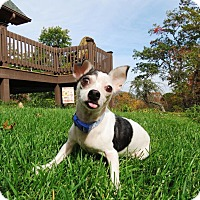 Adopt A Pet :: Hope - Arden, NC
