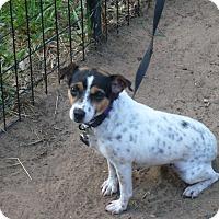 Adopt A Pet :: Korky - Wisconsin Dells, WI