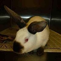 Adopt A Pet :: A1610692 - Los Angeles, CA
