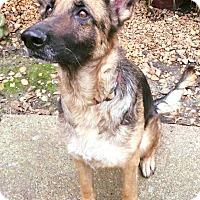 Adopt A Pet :: Stella - Nashua, NH