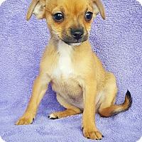 Adopt A Pet :: Gumdrop - Fredericksburg, TX