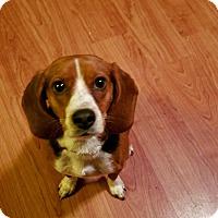 Adopt A Pet :: Missy - Union Grove, WI