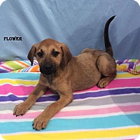 Adopt A Pet :: Flower - East Sparta, OH