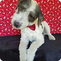 Adopt A Pet :: Kaiser - Troutville, VA