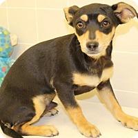 Adopt A Pet :: Kirby - Windsor, CA