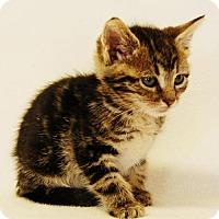 Adopt A Pet :: Catalina - Toccoa, GA