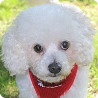 Adopt A Pet :: Johnny - La Costa, CA