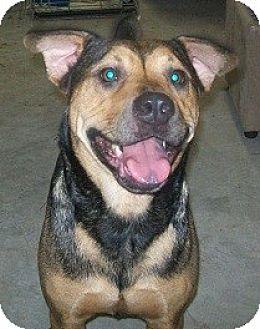 Catahoula Leopard Dog/Shar Pei Mix Dog for adoption in Orange Lake, Florida - Sydney
