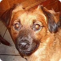 Adopt A Pet :: HEWEY - Hollywood, FL