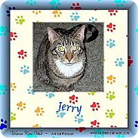 Adopt A Pet :: Jerry - Akron, OH