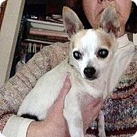 Adopt A Pet :: Buttons - Poulsob, WA