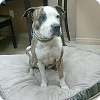 Adopt A Pet :: Lucky - Montreal, QC