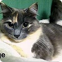 Adopt A Pet :: Sage - Medway, MA