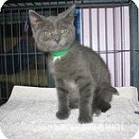 Adopt A Pet :: Moki - Shelton, WA