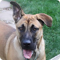 Adopt A Pet :: Brandi - North Olmsted, OH