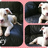 Adopt A Pet :: Paisley - DOVER, OH