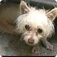 Adopt A Pet :: Reno - Boulder, CO