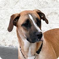 Adopt A Pet :: Lily - Palmdale, CA