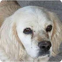 Adopt A Pet :: Daisy - Albuquerque, NM