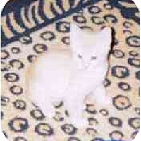 Adopt A Pet :: Ziggy Stardust - Fayette, MO