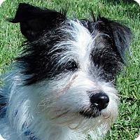 Adopt A Pet :: Smiley - Tumwater, WA