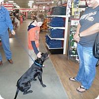 Adopt A Pet :: Lucy - Glastonbury, CT