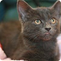 Adopt A Pet :: Catia - Canoga Park, CA