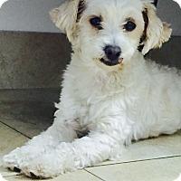 Adopt A Pet :: Cera - Mission Viejo, CA