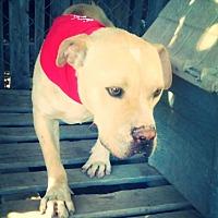 Adopt A Pet :: Tucker - Odessa, TX