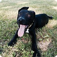 Adopt A Pet :: Lola - Groton, MA