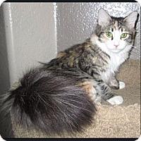 Adopt A Pet :: Lovey - Gilbert, AZ