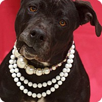 Adopt A Pet :: Bertha - Newnan City, GA