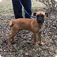 Adopt A Pet :: Tank - Brattleboro, VT