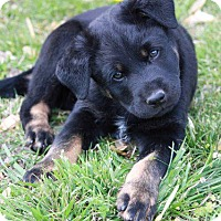 Adopt A Pet :: Jones - Aurora, CO