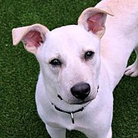 Adopt A Pet :: Kosmo - Loxahatchee, FL