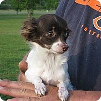 Adopt A Pet :: Tiny Tot 4lbs - Greenville, RI