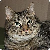 Adopt A Pet :: Miller (LE) - Little Falls, NJ
