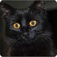 Adopt A Pet :: Marshmallow - Lunenburg, MA