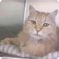 Adopt A Pet :: Jack - Lunenburg, MA