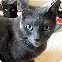 Adopt A Pet :: Malik - Alexandria, VA