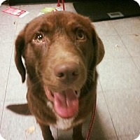 Adopt A Pet :: Kona - Cumming, GA