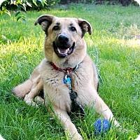 Adopt A Pet :: Roxie - Denver, CO